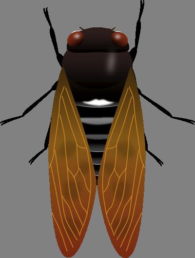アブラゼミの画像 p1_32