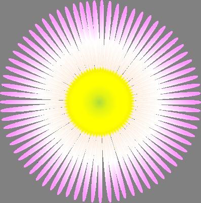 ハルジオンの画像 p1_13