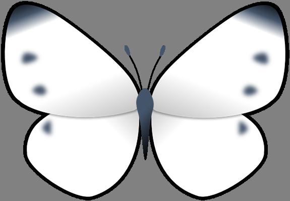 モンシロチョウの画像 p1_7